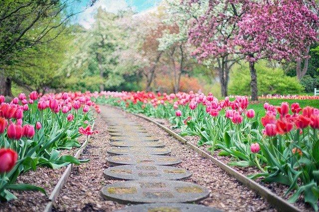Le jardin pour un lieu d'apaisement assuré